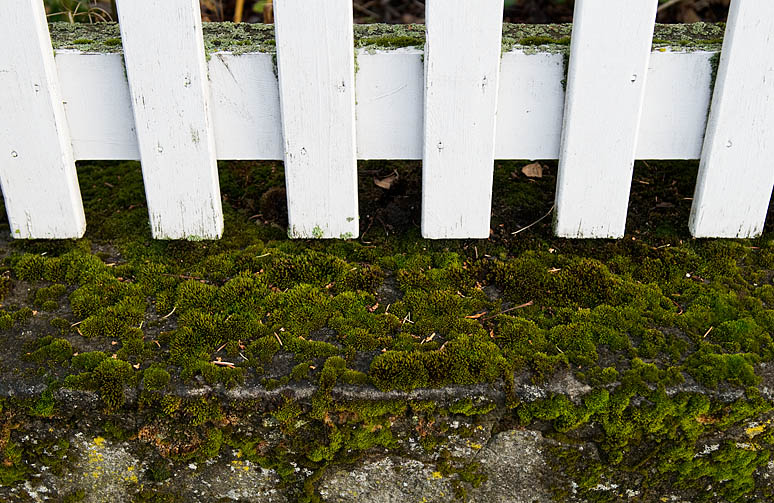 White fence and moss - Reykjavik - Iceland