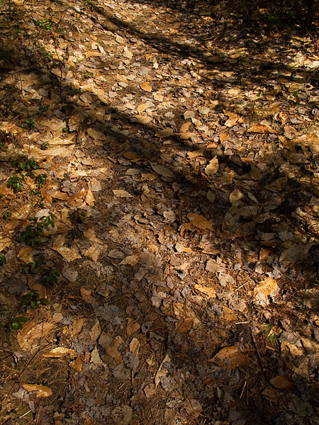 Shadows on Forest Floor - Eau Claire Gorge