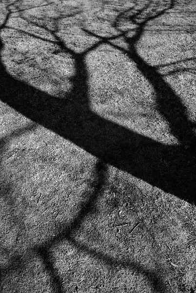 Tree Shadow - IR - North Bay - Ontario