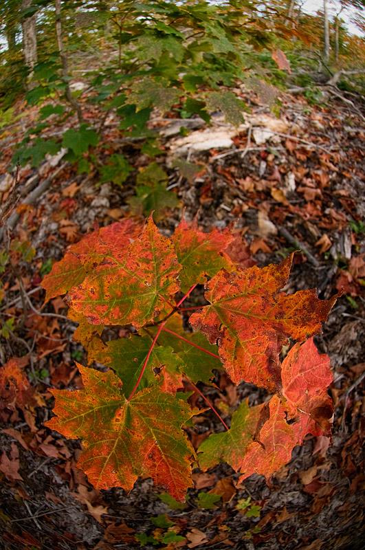 Fall Colour - North Bay - Ontario