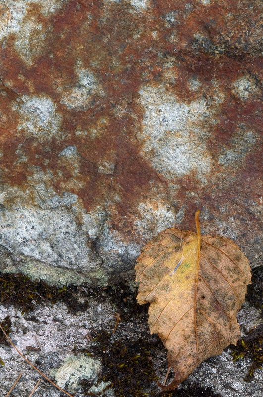 Leaf and Rock - Temagami - Ontario