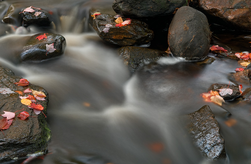 Leaves on Duchesnay Creek - North Bay - Ontario