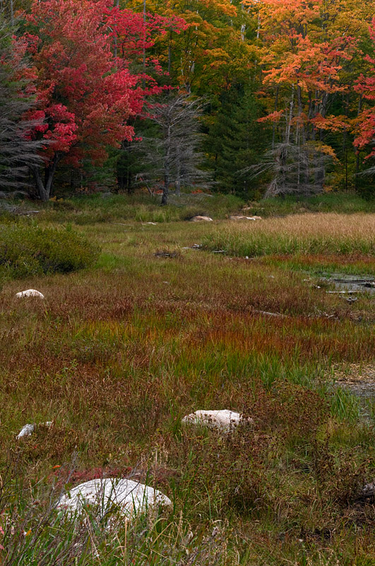 Fall Colour - Algonquin Park - Ontario
