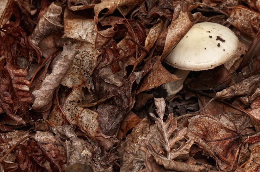 Mushroom - Algonquin Park - Ontario