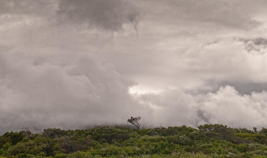 Tree - Wilsons Promontory - Australia