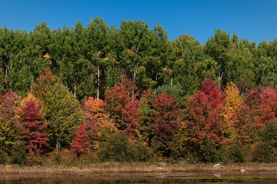 Fall Colour - Algonquin Park - Ontario