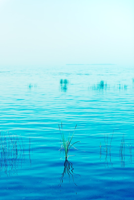 Reeds - North Bay - Ontario